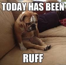 funny sad dog - Dump A Day